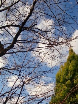 2009_1231_150159-CIMG0503.jpg